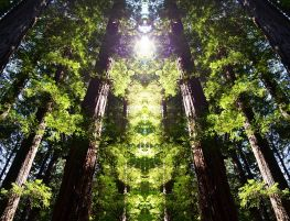 Redwood_Sanctuary-sm11